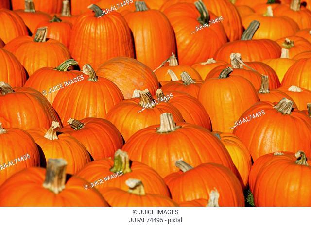 Detail view of pumpkins in autumn