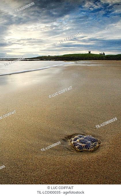 A single stone lying in sand on a deserted beach with a castle in the background
