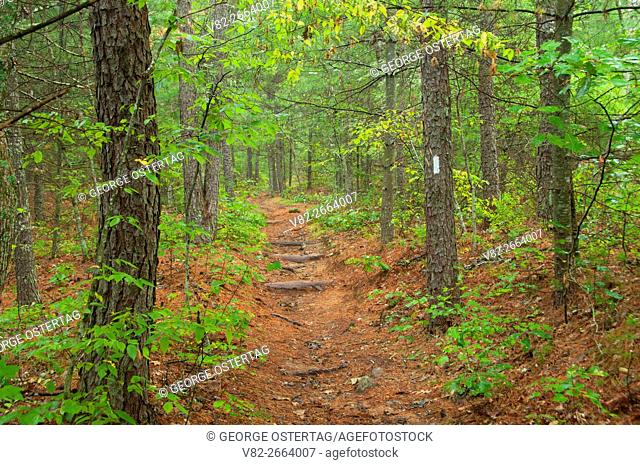 Mount Tom Trail, Arcadia Management Area, Rhode Island