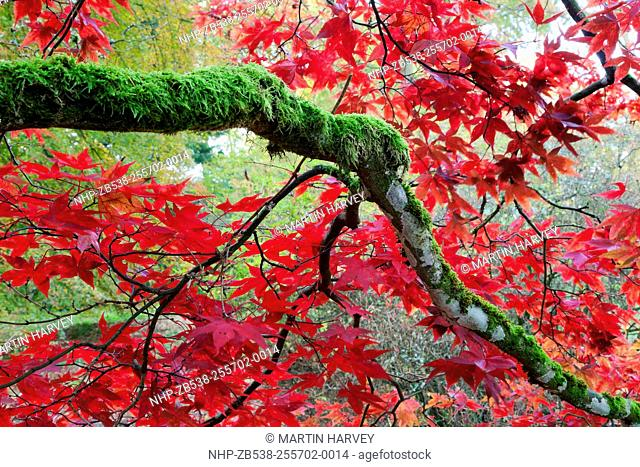 Leaves in shades of red covering trees
