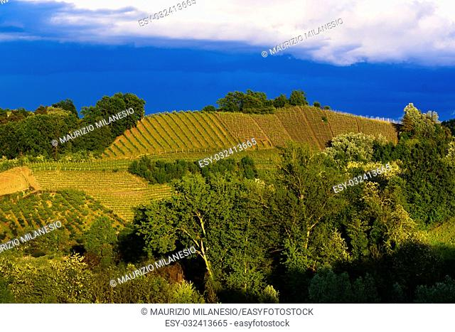 View of the vineyards and hills of Roero Piedmont Italy during a thunderstorm, suggestive contrast between dark skies and vineyards illuminated by the afternoon...