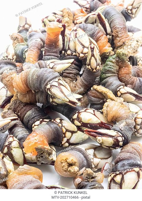 Close-up of fresh goose barnacles
