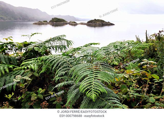 The Jacobites' last stand, Sound of Arisaig, Highlands, Scotland, United Kingdom, Europe