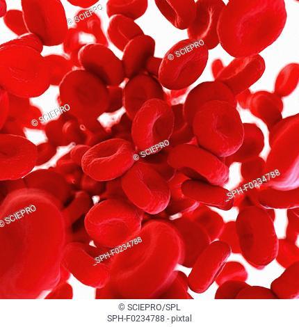 Illustration of human blood cells