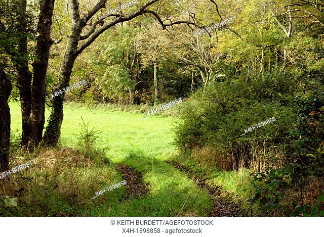 Trackway into a field surrounded by trees, Wales