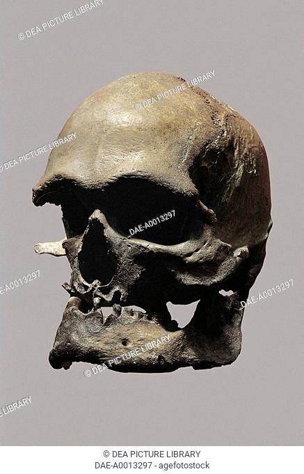 Anthropology - Cro-Magnon type skull of Homo sapiens sapiens.  Bonn, Rheinisches Landesmuseum Bonn (Archaeological And Art Museum)