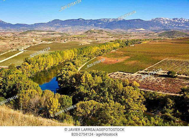 Vineyards in autumn, Ebro River, La Estrella Monastery, San Asensio, La Rioja, Spain, Europe