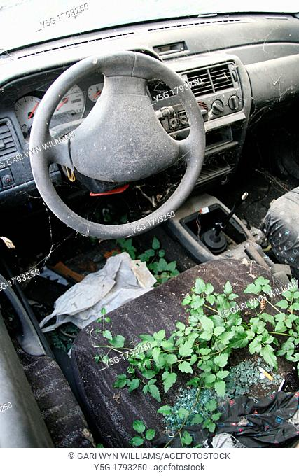 plant growing in abandoned car