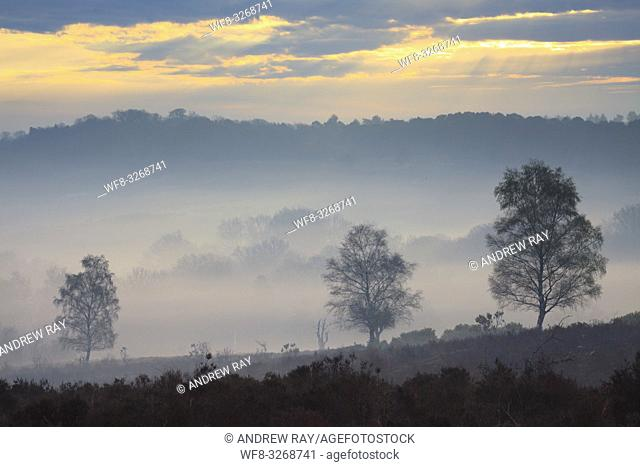 Tree's on the northern slopes of Mogshade Hill in the New Forest National Park, captured at sunrise on a misty morning in mid April