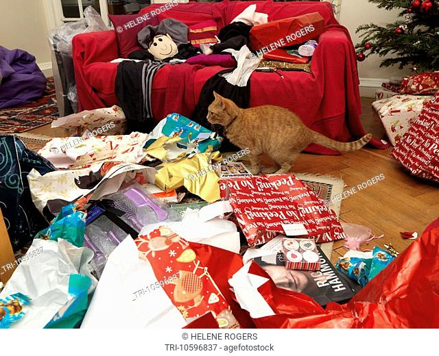 Cat Amongst Wrapping Paper and Presents Christmas Morning