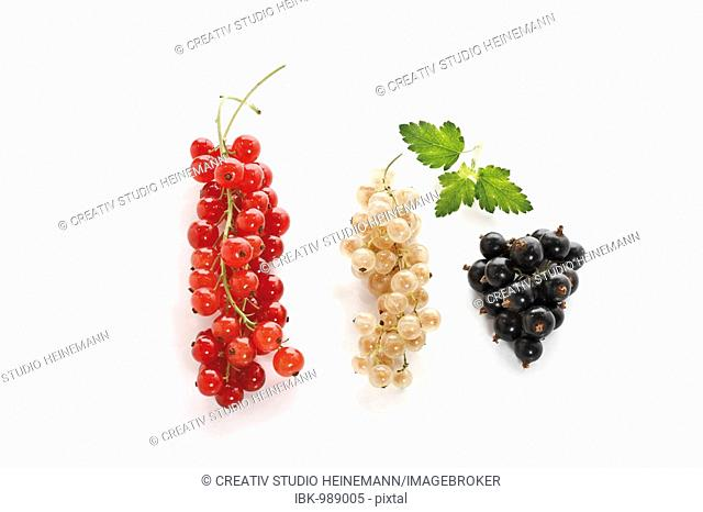 Red, white and black currants with small leaves