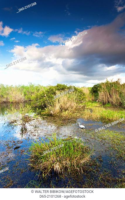 USA, Florida, Everglades National Park, swamp view from The Anhinga Trail