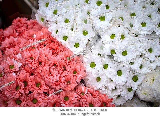 Close up shot of bunches of pink and white Gerbera flowers at the Bronisze Wholesale Market - one of the biggest fruits and vegetables markets in Poland