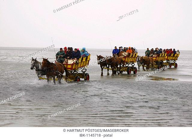 Carriages in the Wadden Sea between Cuxhaven and Neuwerk Island, Germany, Europe