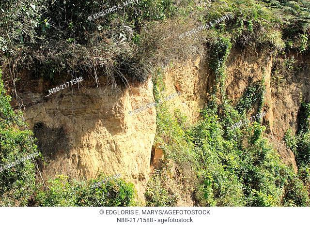 Mountain soil erosion. Cloudy forest, Altos de pipe, Venezuela