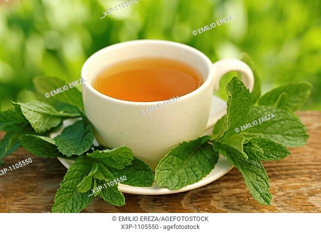 Mint infusion (Mentha sp.)