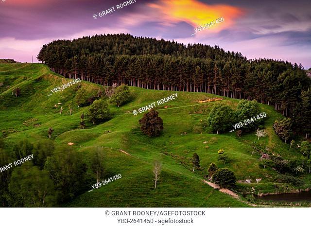 Rural Landscape Near Pukekohe, North Island, New Zealand