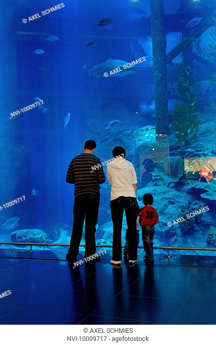 Dubai Aquarium and Underwater Zoo, saltwater aquarium in Dubai Mall, Dubai, United Arab Emirates, Middle East