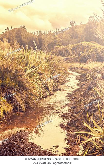 Outback country details on a shallow river through a sunflared landscape. Zeehan, West Tasmania, Australia