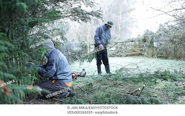 Professional gardener pruning tree in winter
