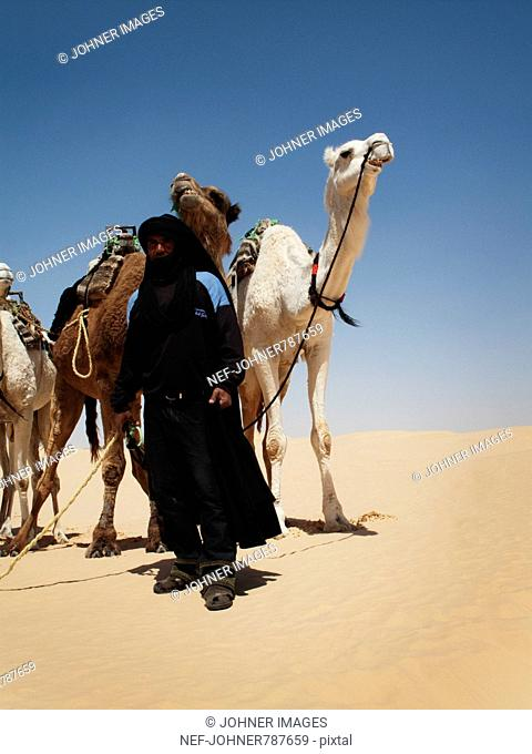 A Bedouin with dromedaries in the desert, Tunisia