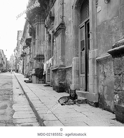 The buildings along a typical street of the neighbourhood called Ragusa Ibla. There's a a dog in the doorway of a house. Ragusa, 1955