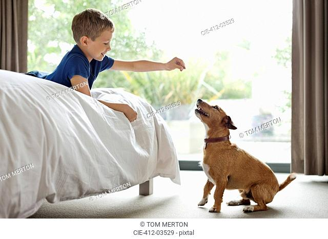 Boy giving dog treat in bedroom