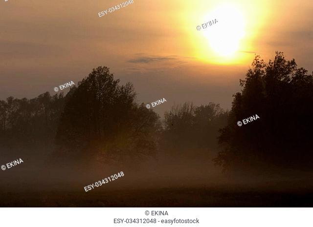 fog mist haze smoke brume toman. Fog in autumn oak forest. Misty morning in autumn forest