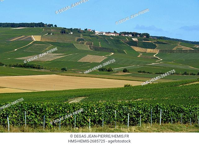France, Marne, Mutigny, Vineyards of champagne dominated by a village
