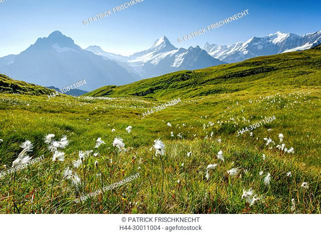 Wetterhorn, Schreckhorn, Finsteraarhorn, Schweiz