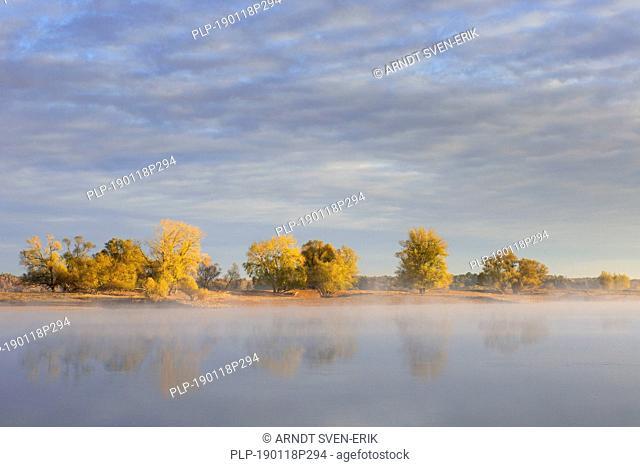 Early morning mist over river Elbe, biosphere reserve Niedersächsische Elbtalaue / Lower Saxonian Elbe Valley, Niedersachsen / Lower Saxony, Germany