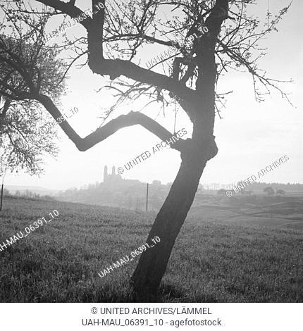 Baum im Gegenlicht, Deutschland 1930er Jahre. Tree in backlight, Germany 1930s