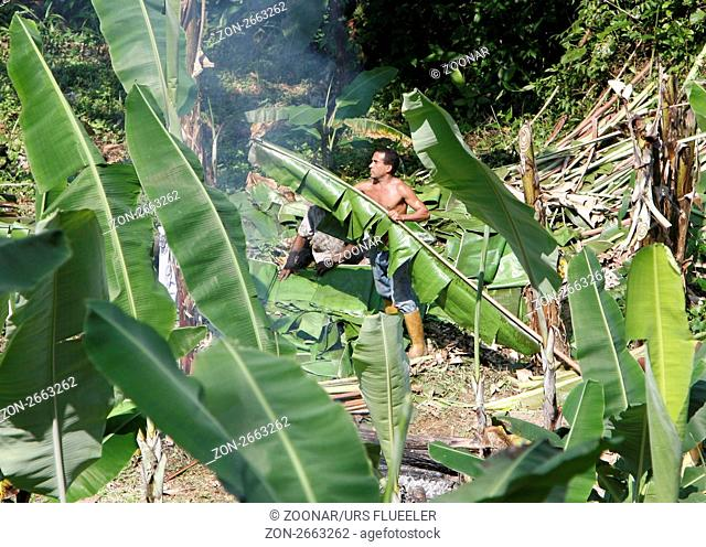 Suedamerika, Karibik, Venezuela, Nord, Choroni, National Park Hanri Pittier, Landwirtschaft, Arbeit, Bananen, Plantage, Bananenblaetter, Mann, Regenwald