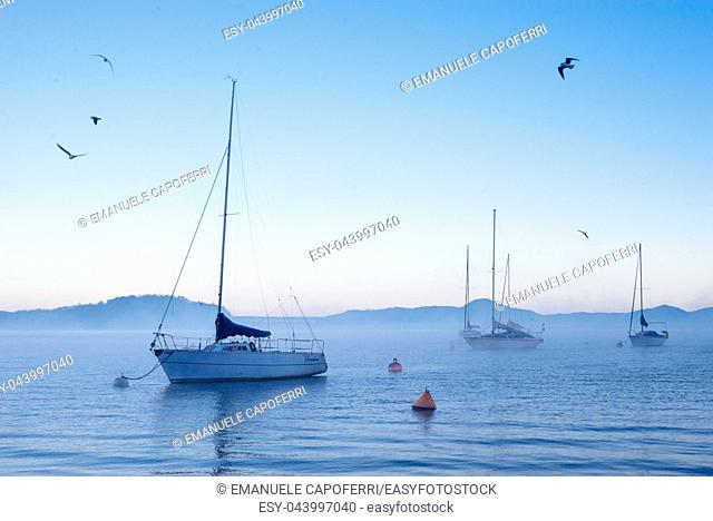 Sailboats at dawn on Lake Maggiore in winter seagulls fly