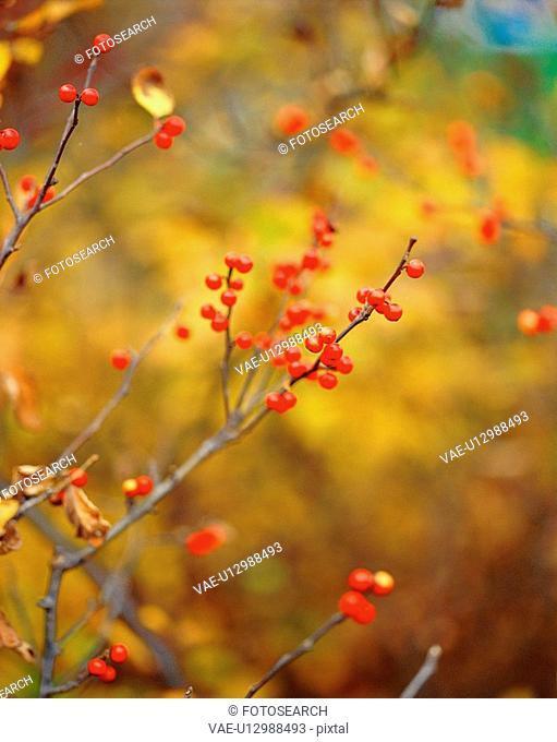 nature, plants, tree, plant, film