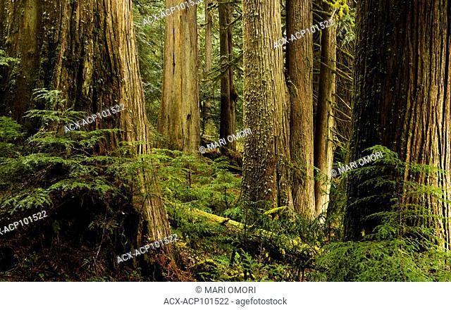 A rainforest in Chilliwack, British Columbia, Canada