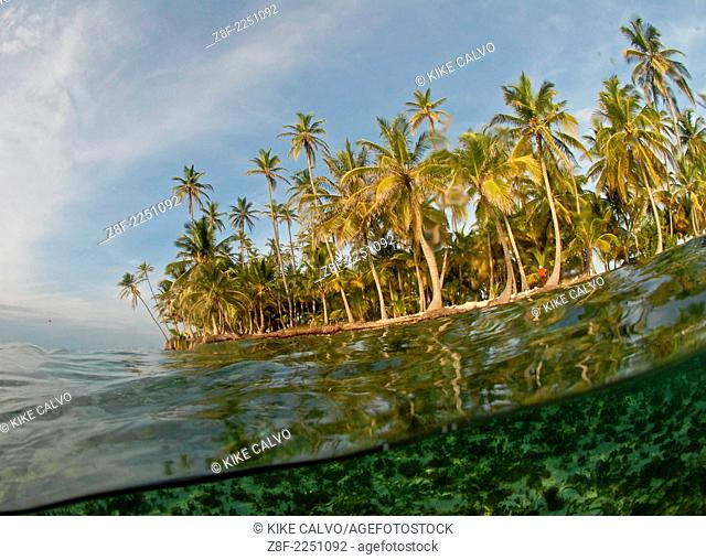Palm trees and underwater view of San Blas Islands