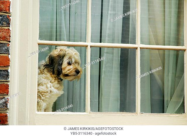 A dog patiently waits for his best friend to come home