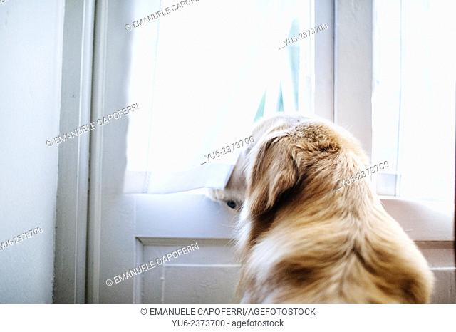 Dog looks out the window