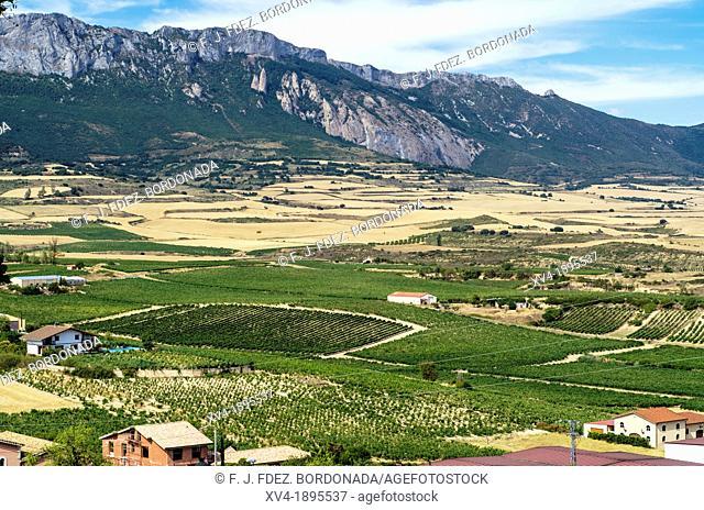 Vineyard paroramic views of Laguardia, La Rioja, Spain