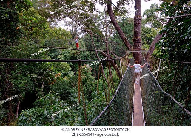 Suspension bridge in jungle, Kuala Tahan, Taman Negara National Park, Malaysia, Asia
