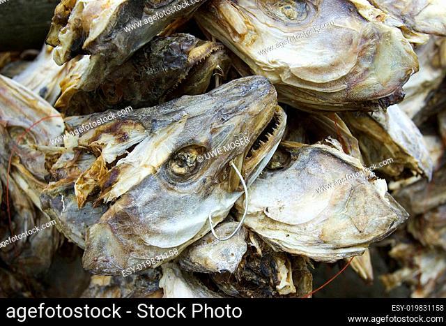 Stockfisch, Koepfe, Trocknung