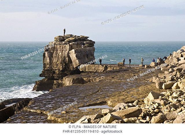 People climbing on large rock at coastal headland, Pulpit Rock, Portland Bill, Isle of Portland, Dorset, England, January