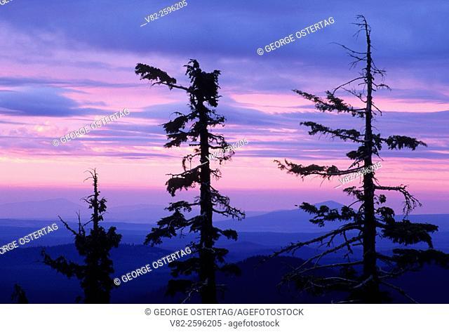 Tree dawn, Crater Lake National Park, Oregon
