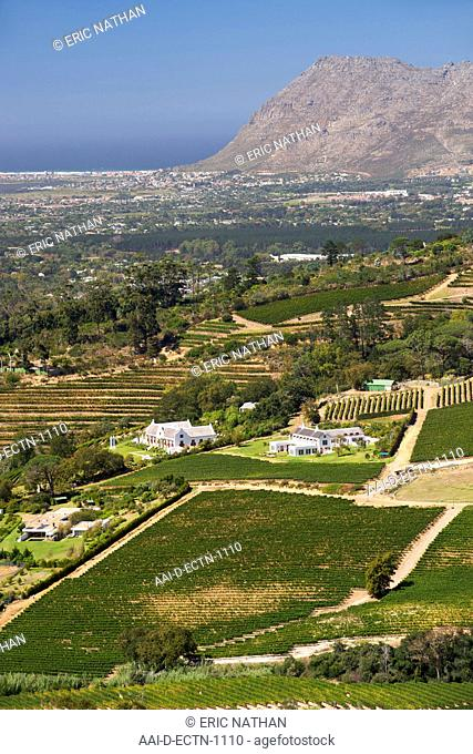 View of vineyards in the Constantia area of Cape Town's southern suburbs in South Africa