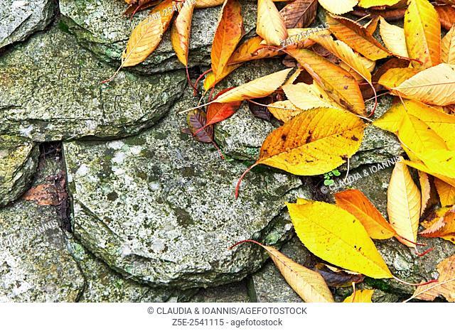 Autumn leaves lying on shingle roof