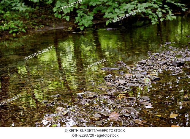 River Wyre, Llanrhystud flowing through woodland, Wales, UK