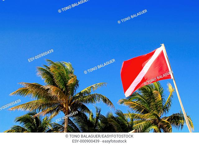 Scuba diver down flag in tropical palm trees blue sky background