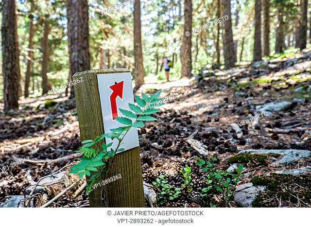 Red arrow indicating direction. Signage on the Path of the Forest Grandparents. Laguna Negra Natural Park and Glacier Circuses of Urbión