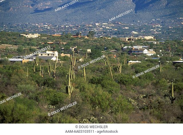 Houses in Sonoran Desert, Tucson, Arizona